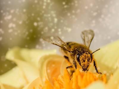 bee 1726659 1920 ©pixabay